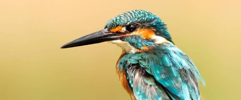Bird - Song Poem